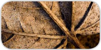 Определение минеральной составляющей в листьях